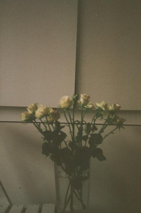 http://ivanabiocina.com/files/gimgs/111_0035000rrr5.jpg